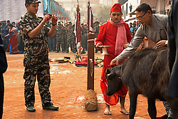 Nepalese military watch over the blood sacrifice of goats and buffaloes early on outside the Kumari Chen in Kathmandu for one of the last festivals of the year, known as Chaite Dashain. The Kathmandu Kumari doesn't witness the event herself as she's not supposed to witness sacrifices – but it's done in her honor.