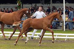 010-Amigo<br /> KWPN Paardendagen 2005<br /> Photo © Hippo Foto