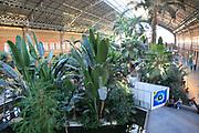 Tropical rainforest plants growing in garden inside Atocha railway station, Madrid , Spain
