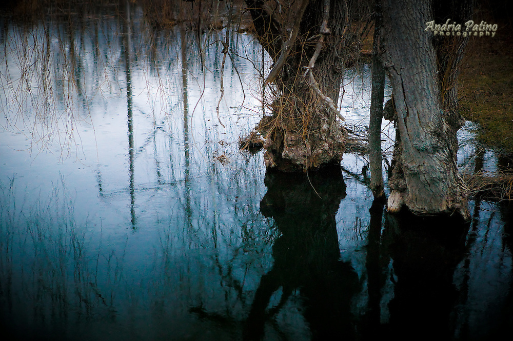 Weeping Willow Tree stumps