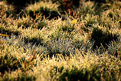 UK ENGLAND WILTSHIRE 26JUN08 - Dew on grass in morning light near the river Kennet in rural Wiltshire, western England...jre/Photo by Jiri Rezac / WWF UK..© Jiri Rezac 2008..Contact: +44 (0) 7050 110 417.Mobile:  +44 (0) 7801 337 683.Office:  +44 (0) 20 8968 9635..Email:   jiri@jirirezac.com.Web:     www.jirirezac.com..© All images Jiri Rezac 2008 - All rights reserved.