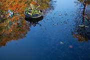 Reflection of autumnal colors of foliage and blue sky in a pool with a pot and aquatic plants in the Jardin de l'Ecole de Botanique (garden of the botanical school), Jardin des Plantes, Paris, 5th arrondissement, France. Founded in 1626 by Guy de La Brosse, Louis XIII's physician, the Jardin des Plantes, originally known as the Jardin du Roi, opened to the public in 1640. It became the Museum National d'Histoire Naturelle in 1793 during the French Revolution. Picture by Manuel Cohen