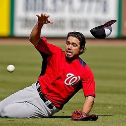 Mar 6, 2013; Clearwater, FL, USA; Washington Nationals third baseman Anthony Rendon (6) slides to the ground while chasing a fly ball hit by Philadelphia Phillies left fielder Laynce Nix (not pictured) scoring Domonic Brown (not pictured) on the play during the bottom of the fifth inning of a spring training game at Bright House Field. Mandatory Credit: Derick E. Hingle-USA TODAY Sports