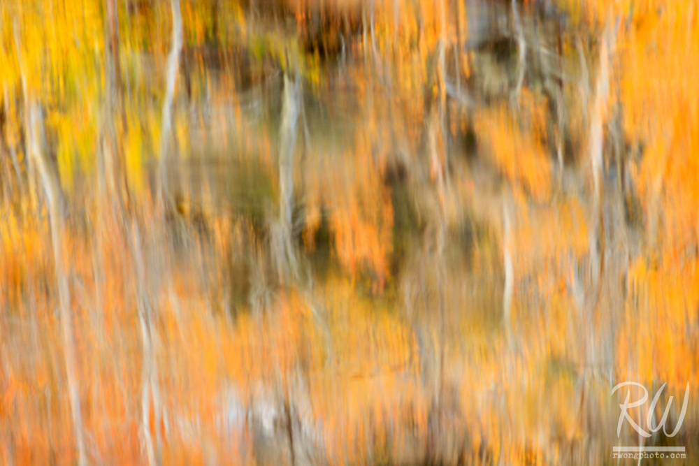 North Lake Fall Color Water Reflection Abstract, Eastern Sierra, California