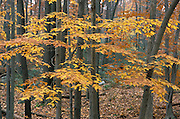 Forest during the fall season