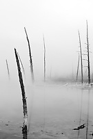Fog surrounding Opalescent Pool in the Black Sand Basin, Yellowstone National Park