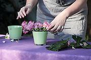 Florist arranges a flower bouquet
