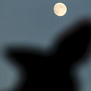 Roma 27/05/2018 Piazza di Siena<br /> 86 CSIO Piazza di Siena<br /> la luna ed il pennacchio di un carabiniere del  4&deg; Reggimento Carabinieri a cavallo