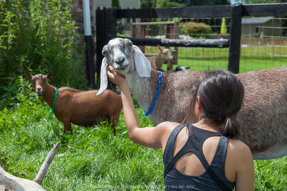 Goat Yoga at Haute Goat, Newtonville, Ontario