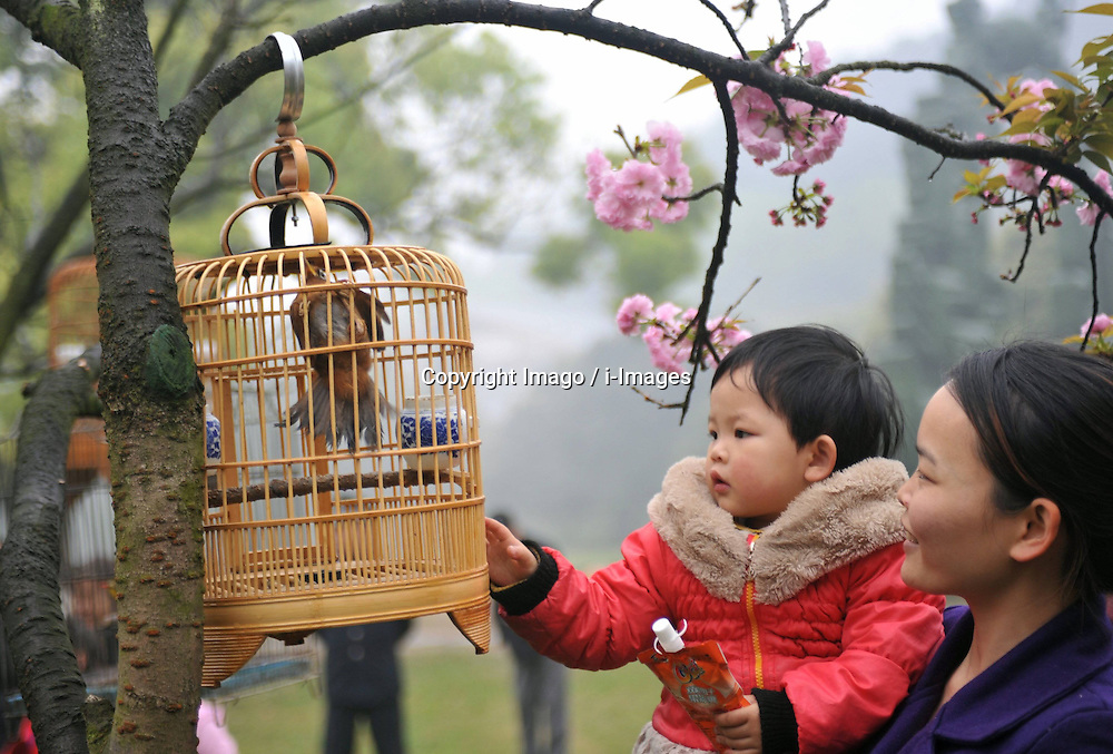 A woman views a bird hung from cherry trees with her child at the Xishan Park in Guilin City, southwest China s Guangxi Zhuang Autonomous Region, March 16, 2013. More than 70 cages of birds were displayed for the tourists to view at a cherry forest here Saturday, March 16, 2013.. Photo by Imago / i-Images...UK ONLY.Contact..