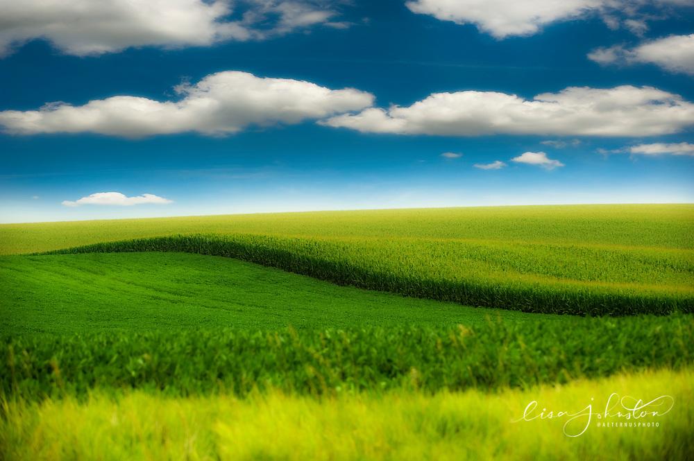 Lisa Johnston | lisa@aeternus.com | Tiwtter: @aeternusphoto Iowa cornfields in the summer.