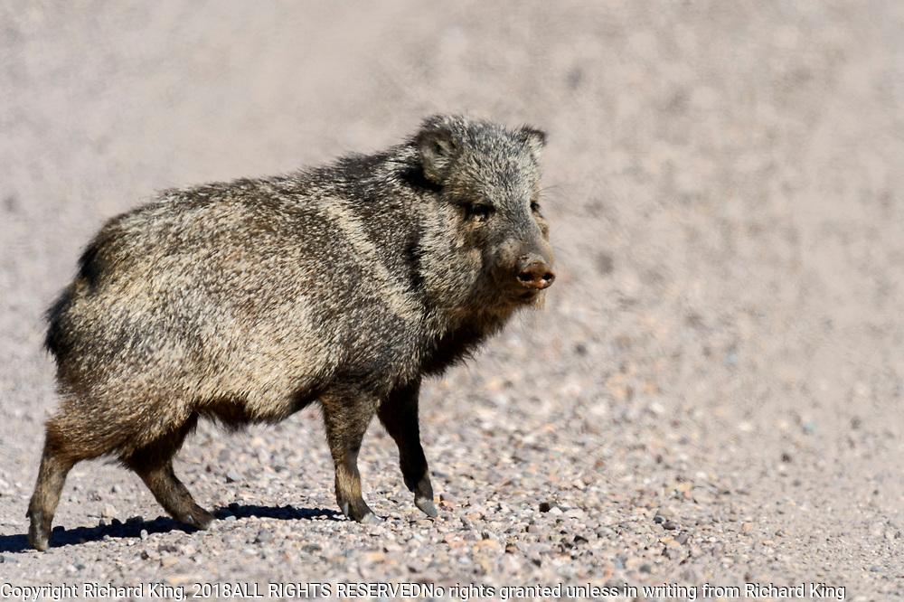 San Bernadino National Wildlife Reservet photographs Arizona, USA