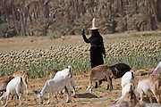 A woman dressed in a black abaya and shielded from the sun in a wide-brimmed straw hat called a nakhl, herds goats near Shibam on the edge of the Arabian Peninsula's Rub al Khali, or Empty Quarter. This section of desert holds the world's largest stretch of sand. Hadhramawt, Yemen