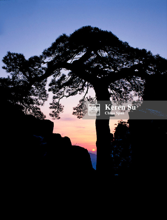 Silhouette of pine tree at sunrise, Mt. Huangshan (Yellow Mountain), Anhui Province, China