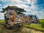 """23 NOVEMBER 2016 - AYUTTHAYA, THAILAND: Rice is transferred from a harvester to a truck during the rice harvest in Ayutthaya province, north of Bangkok. Rice prices in Thailand hit a 13-month low early this month. The low prices are hurting farmers. Rice exports account for around 10 percent of Thailand's gross domestic product, and low prices frequently lead to discontent in the rural areas of Thailand. The military government has responded by sending soldiers to rice mills, to """"encourage"""" mill owners to pay farmers higher prices. The Thai army and navy are also buying for their kitchens directly from farmers in an effort to get more money into farmers' hands.  PHOTO BY JACK KURTZ"""