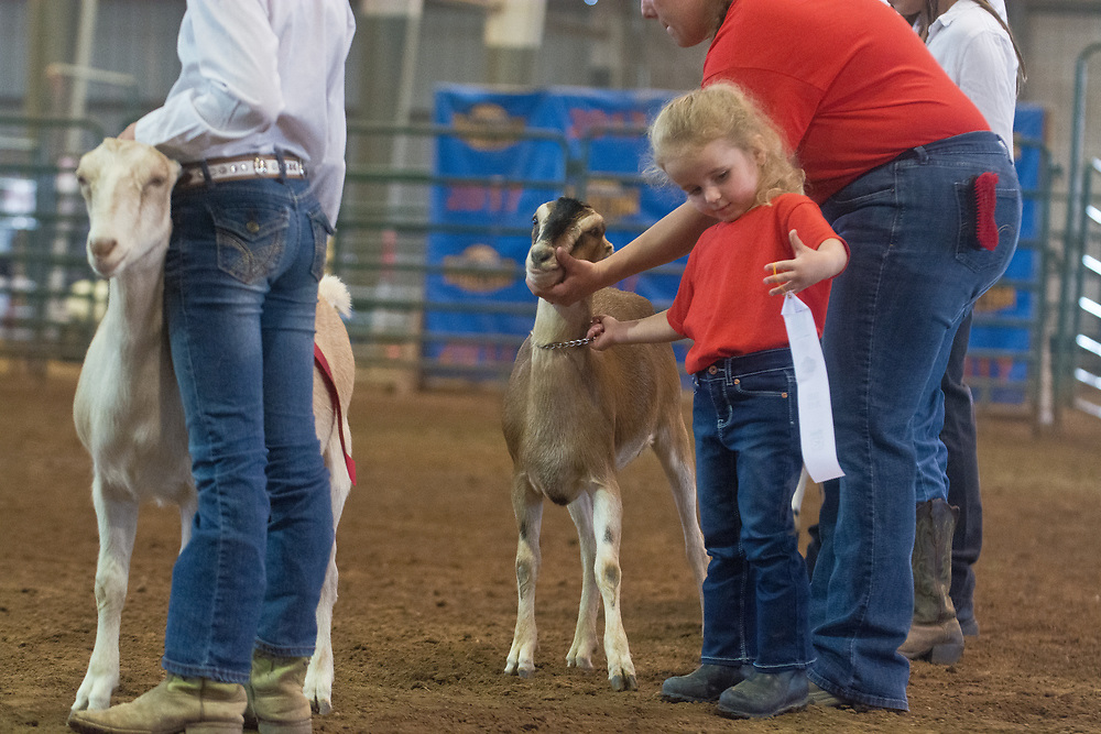 New Mexico State Fair, Sept. 14, 2017 (Marla Brose/Albuquerque Journal)