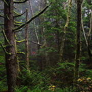 Owen Dudley rides in the mist of the Northwest Rainforest near Bellingham, WA.