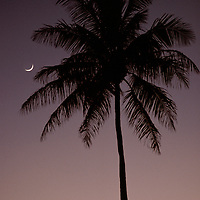 Palm silhouette and crescent Moon at dusk, Ala Moana, Oahu, Hawaii