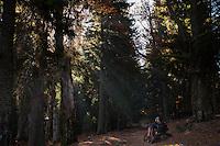 Mountain biker and hiker (Marius Berchi) in the mixed old growth Spruce (Picea abies) and Common beech (Fagus sylvatica) forest of the Tarcu Mountains Natura 2000 site. Southern Carpathians, Munții Ṭarcu, Caraș-Severin, Romania.