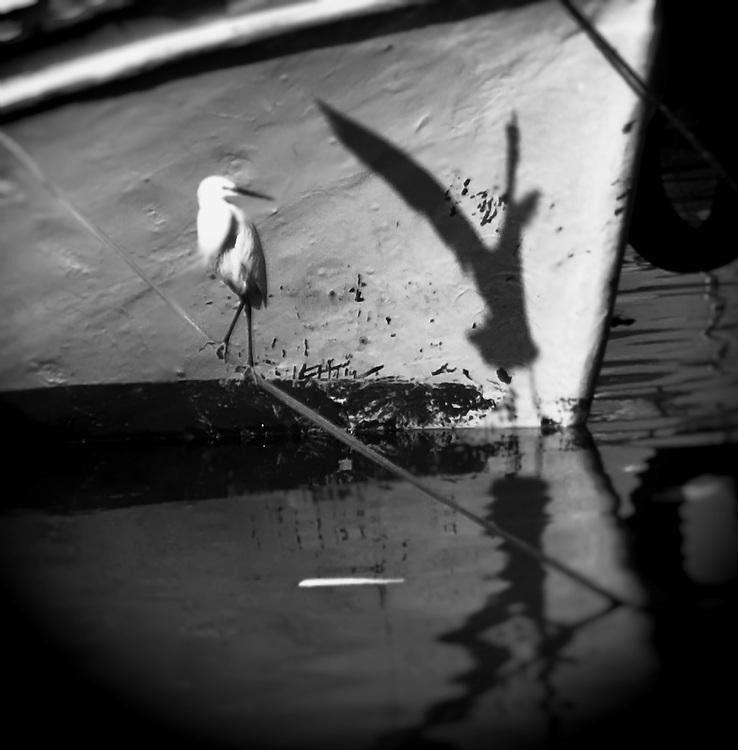 Yafo harbour seabirds