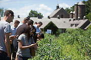 Lincoln at Stone Barns Center for Food and Agriculture on June 30, 2016 in Tarrytown, New York. (Photo By Ben Hider)