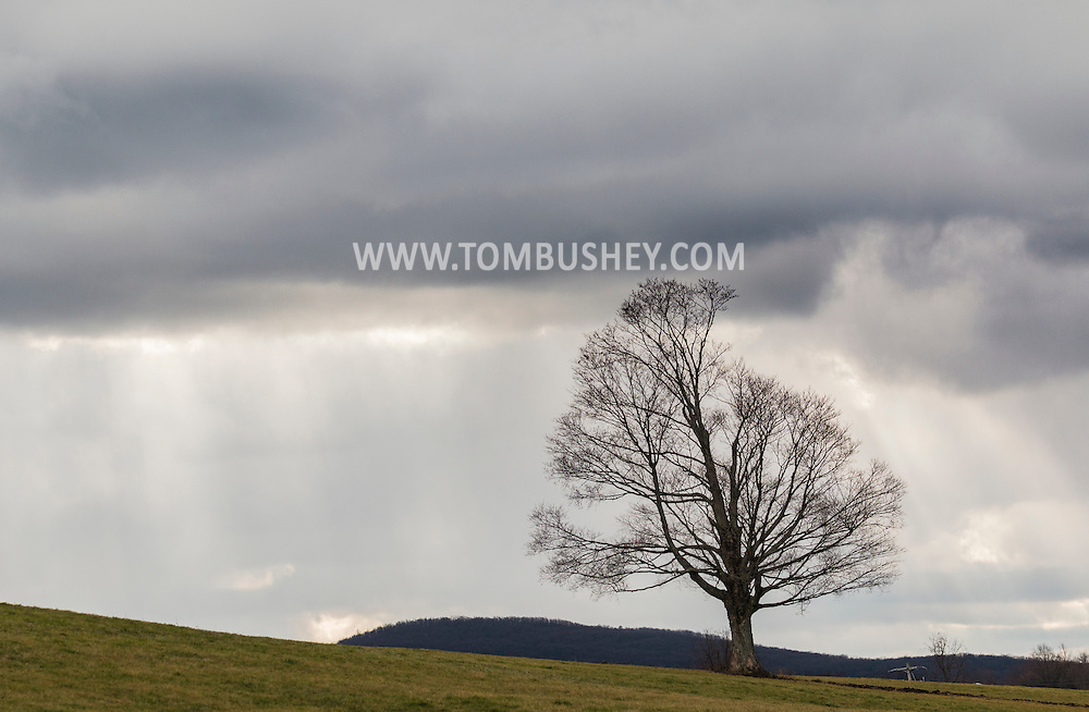 Goshen, New York - A lone tree and clouds on Dec. 3, 2015.