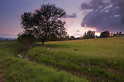 Late evening next to Durleigh Brook on the edge of The Meads near Bridgwater.