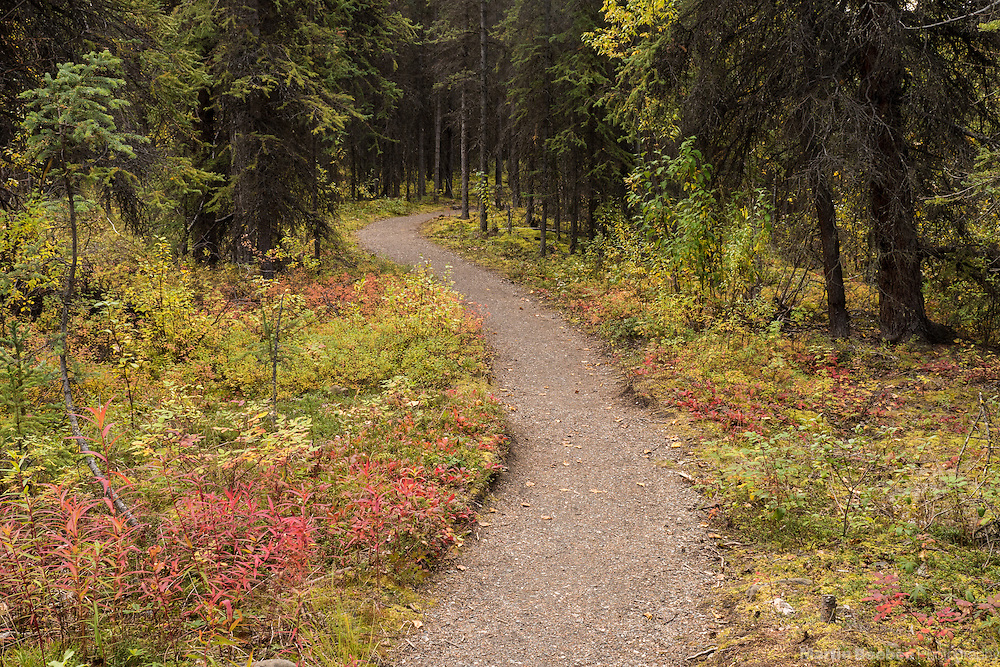 Triple Lakes Trail winding through forest, Denali National Park, Alaska
