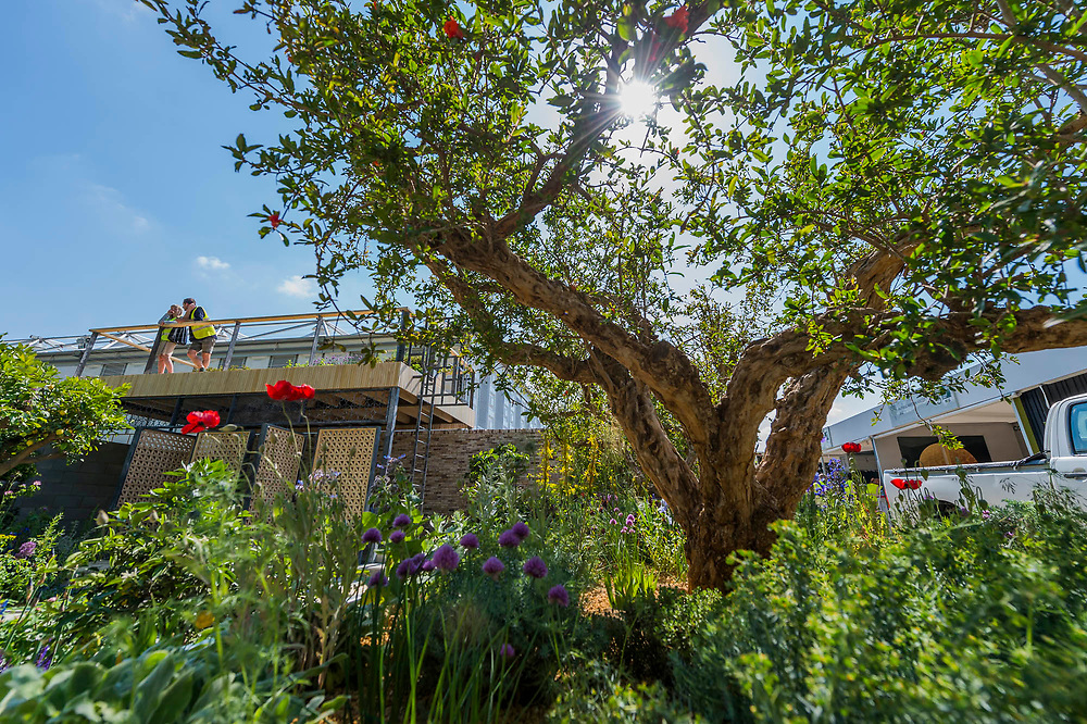 The Lemon Tree Trust Garden, Sponsor: The Lemon Tree Trust, Designer: Tom Massey and Contractor: Landscape Associates - The RHS Chelsea Flower Show at the Royal Hospital, Chelsea.