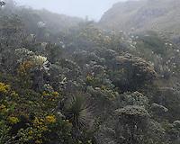 Reserva Ecológica El Angel, camino entre Tufiño y Maldonado