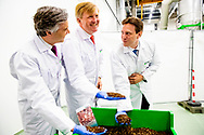 BERGEN OP ZOOM - King Willem-Alexander is given a tour of the new insect farm and an explanation of the production process. The farmed insects form a raw material full of proteins and other nutrients for animal feed. robin utrecht