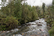 River and temperate rainforest in Pumalin National Park, Chile.