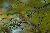 Fall colors and abstracts.  ©2017 Karen Bobotas Photographer