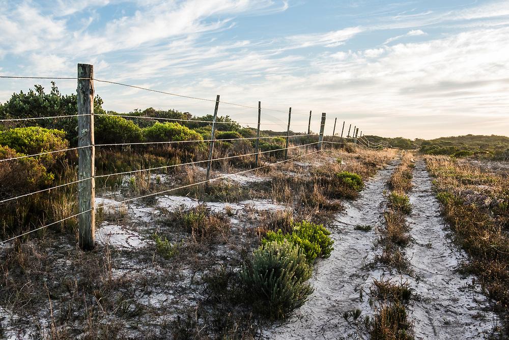 Farm fence amongst Coastal duneveld vegetation, De Mond Nature Reserve, Western Cape, South Africa