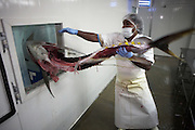 Discarding carcass of yellow fin tuna at Cyprea Marine Foods EU-standard factory at Himmafushi, Republic of Maldives.