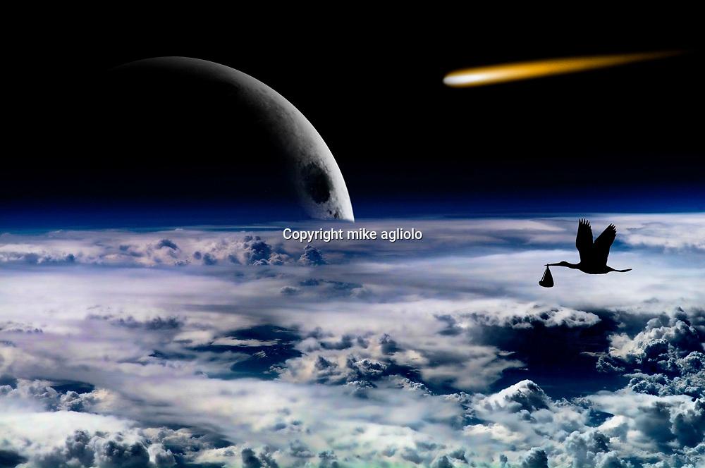 bird in sky with moon