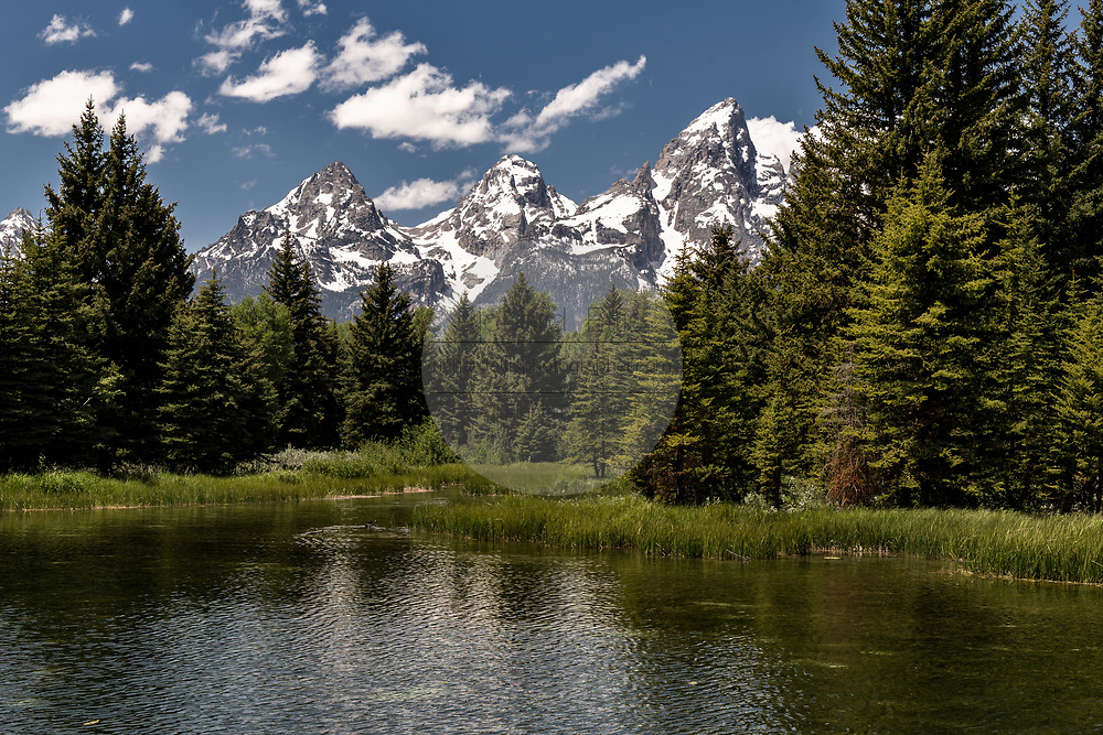 Mount Moran and the Grand Teton mountains reflected on the Snake River at Schwabacher Landing Beaver Pond in the Grand Teton National Park in Moose, Wyoming.