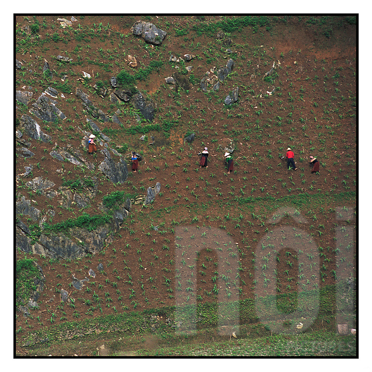 Farmers working on abrupt fields. Can Cau area, after Bac Ha, north of Vietnam, Asia