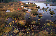 Black Moshannon State Park, marshland, bog,  PA landscapes