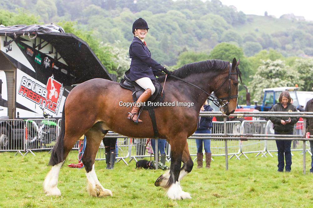 Batley Joshua ridden by Lizzie Chapman
