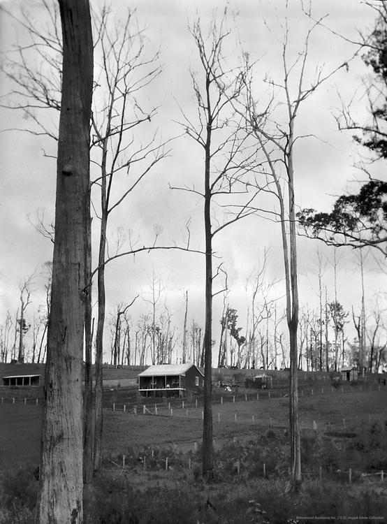 Group Settlement, Western Australia, 1930