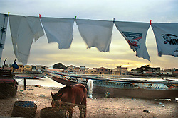 Senegalese traders feed their horses at sunrise before the local fishermen have brought in the days harvest  in the town of St. Louis in Senegal.  West Africa has suffered massive overfishing by foreign fishing fleets, with local small fishing boats forced to fish further and further out to sea or to concentrate their activities in sensitive coastal areas.  In the last 45 years, foreign vessels,   caught an estimated 80 percent of the fish taken from West African waters. The coastal nations took home the remaining 20 percent. And their share may get smaller..(Photo by Ami Vitale)
