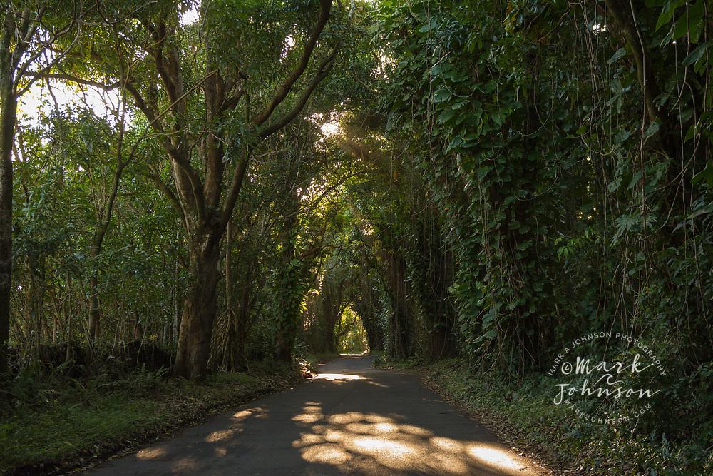Trees and road, Pahoa, Big Island, Hawaii