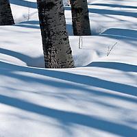 Winter GNP