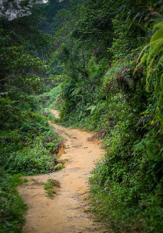 SAPA, VIETNAM - CIRCA SEPTEMBER 2014:  Hiking trail on the mountains in Sapa, North Vietnam.