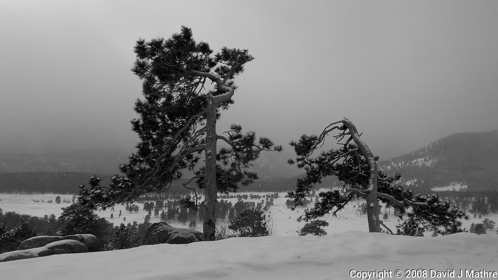 Two Trees with a Winter Storm Approaching. Rocky Mountain National Park. Image taken with a Nikon D2xs camera and 17-35 mm f/2.8 lens (ISO 100, 17 mm, f/11, 1/125 sec).