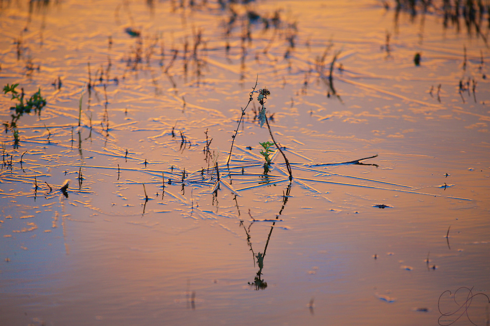 Frozen water under the sunrise at Bosque del Apache