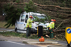 © Licensed to London News Pictures. 12/02/2014. Aberystwyth, UK A fifty foot tree toppled in the winds and crushed a white minibus on the main road into Aberystwyth this afternoon. There are no reports of casualties, The road is closed while workmen chainsaw the tree and remove the debris. Photo credit : Keith Morris/LNP