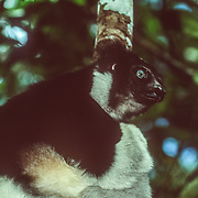 Madagascar Mammals and Birds