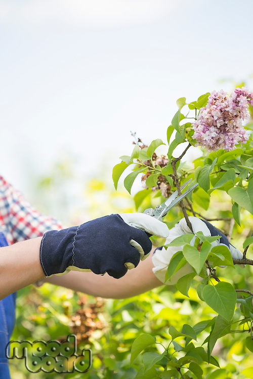 Cropped image of gardener pruning branches at plant nursery